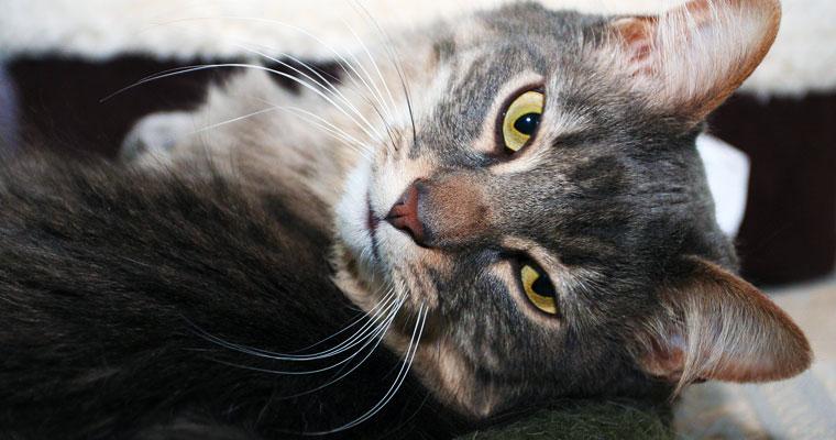 cats-ceasar