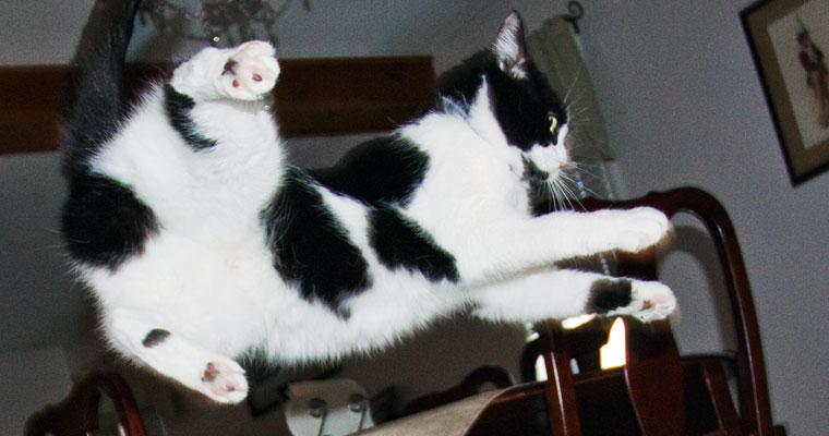 cats-cleo