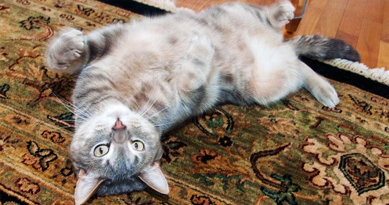 cats-kramer