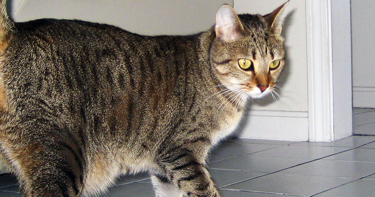 cats-lulu