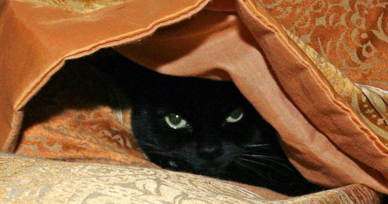 cats-midnight