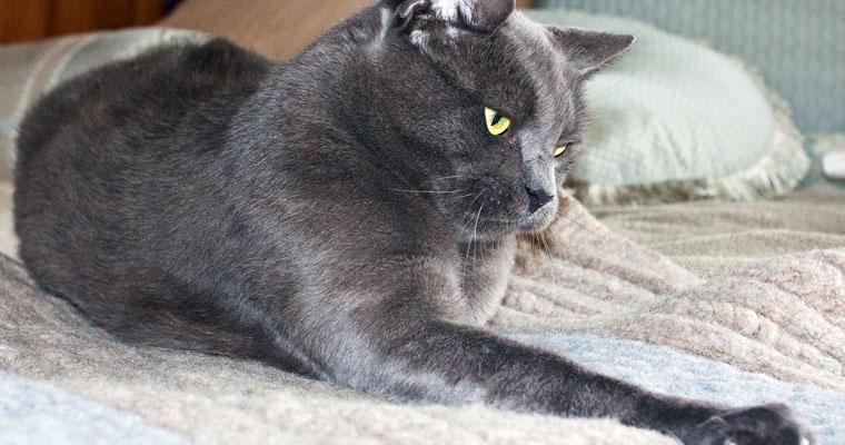 cats-zhivago