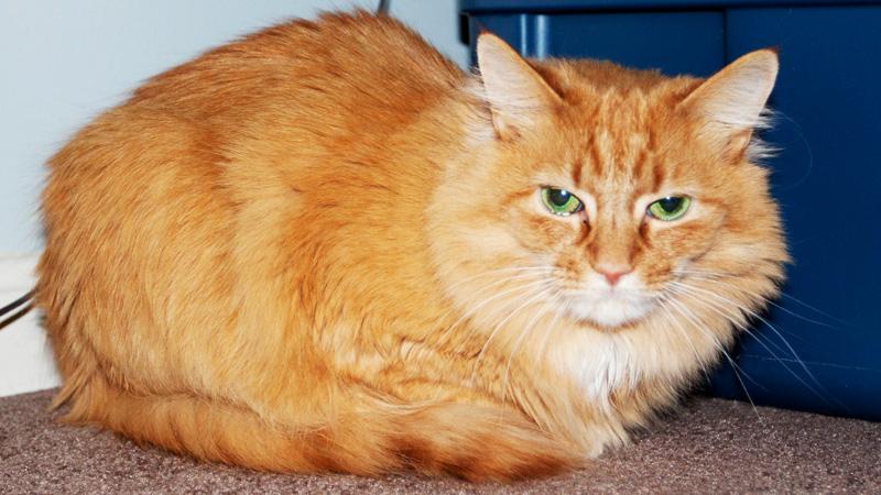 cats_gidget